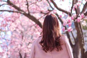 桜を見ている女の子